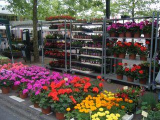DSCF0688 Fleurs forum Romagné